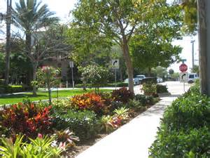 florida friendly landscaping ifas palm extension