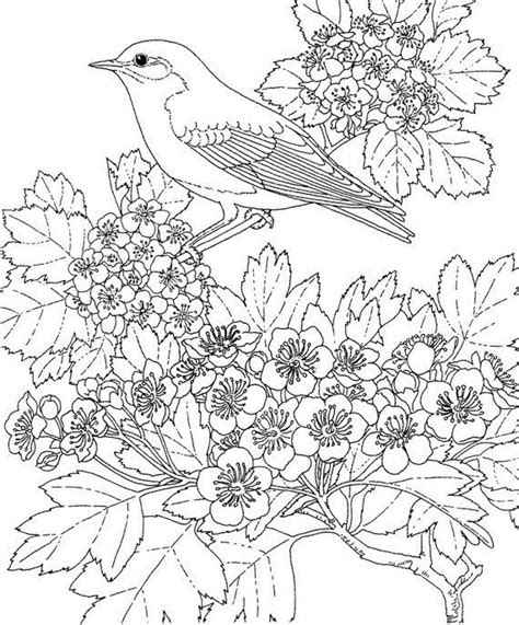 bird design coloring page adult colouring pages easter 10