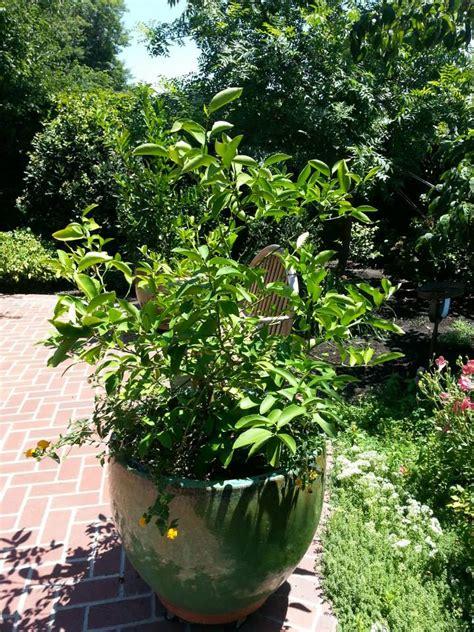 Garden Sacramento by East Sacramento Edible Gardens Tour Sacramento