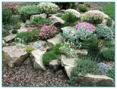 garden herb plants for sale