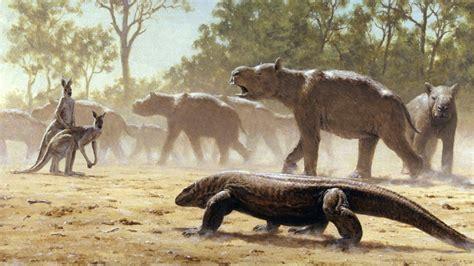 giant wombatlike creatures migrated  australia  years  science aaas