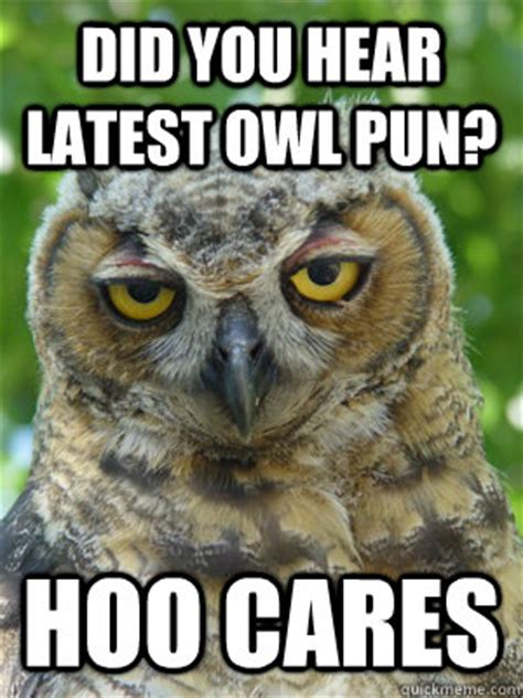 Who Owl Meme - did you hear latest owl pun hoo cares stoner owl