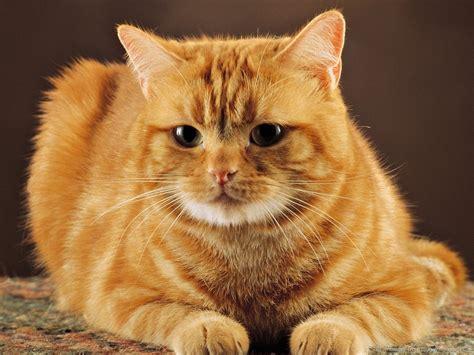 a cat for cat wallpaper 1024x768 12616