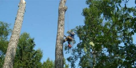 the company of trees a year in a lifetimeâ s quest books carlos tree service a tree trimming company that serves