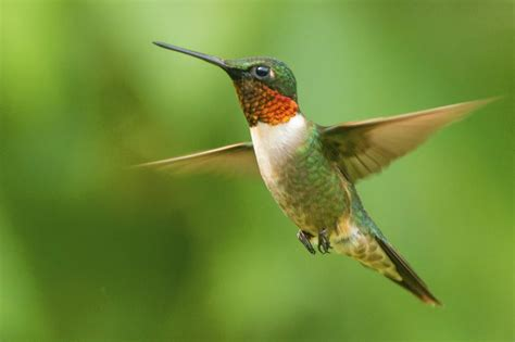 what does a hummingbird symbolize the answer is mystifying