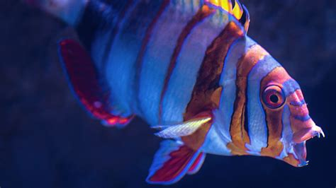 fish  underwater  wallpaper hd wallpapers