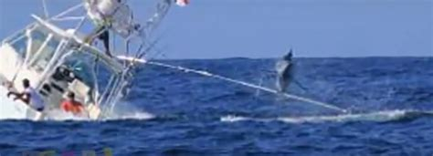 boat sinking in jupiter marlin sinks fishing boat
