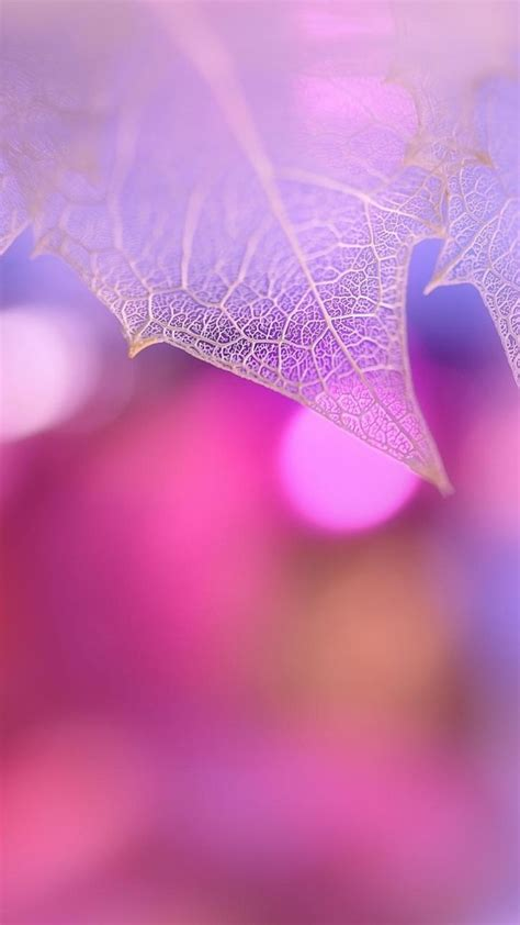 wallpaper zenfone black 720x1280 wallpaper leaf macro pink plant asus zenfone