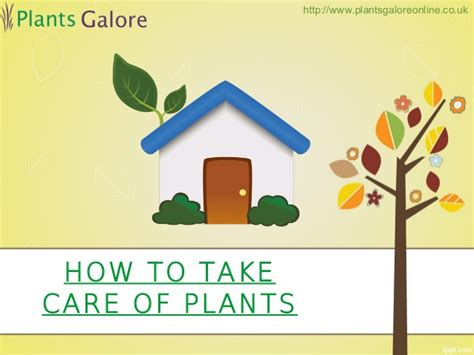 how to take care of plants plants galore