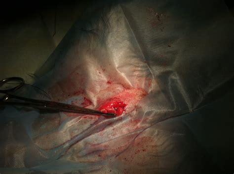 kater kastration wann kastration und sterilisation tier 228 rztliche praxis f 252 r