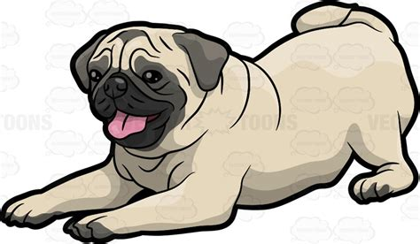 pug clip a pug on the floor vector clip