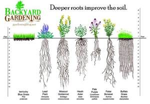 Deep Rooted Vegetables - how to add more topsoil the natural way backyard gardening blog