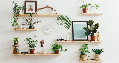 best plants for air quality the best plants for improving air quality proflowers