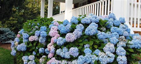 top  shrubs   grow flower power