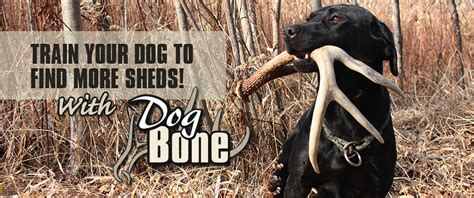 how to your to find sheds bone deer systems bone