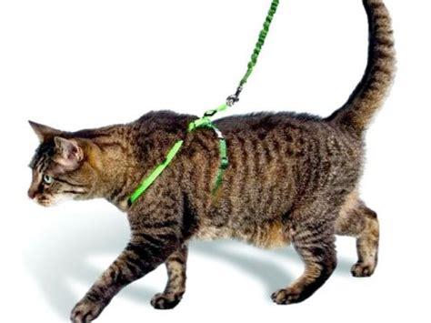 portare il al guinzaglio come educare il gatto comportamento
