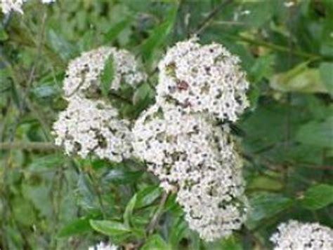 un fiore lilla molto profumato orto botanico