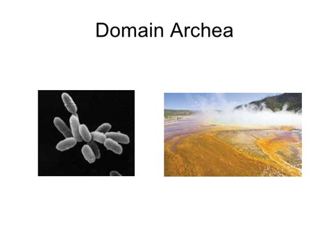 themes of biology exles biology themes of biology