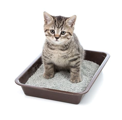 how to get rid of urine smell what causes and how to get rid of cat urine smell