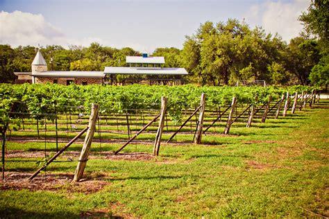 backyard vineyard triyae com backyard vineyard ideas various design