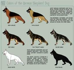 german shepherd color chart german shepherd coat colors breeds