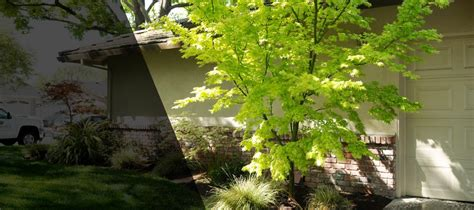 aguiar s landscaping landscaping modesto ca