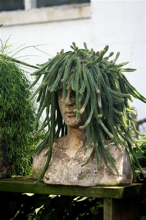 medusa planter pinterest the world s catalog of ideas