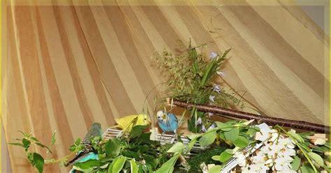 cocorite alimentazione la cocorita giuliva alimentazione dei pappagallini