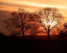bäume garten sonnenuntergang b 228 ume hintergrundbilder sonnenuntergang