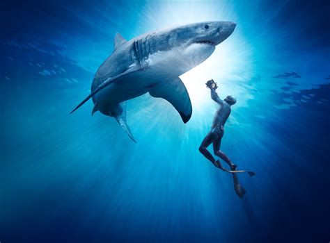Imax Great White Shark 3d The Review Salty Popcorn Picture Of