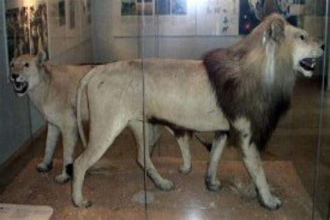 imagenes de animales extinguidos fotos los animales extintos que ya s 243 lo puedes ver en