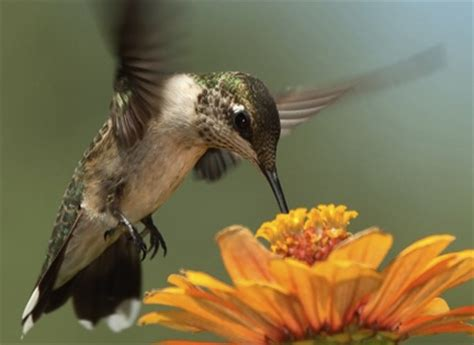 hummingbirds arrive in houston