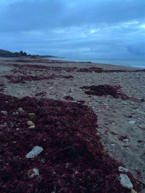 si鑒e de r騏nion des algues rouges mon 206 le de r 233 wifi