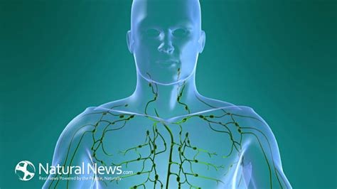 How To Detox The Lymphatic System Naturally by Lymphatic Drainage How To Detoxify Lymph Nodes Here Are
