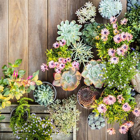 design flower containers 38 ideas for succulents in containers sunset magazine