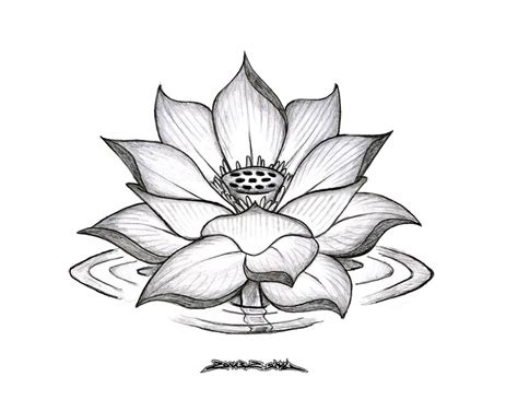 tumblr flower tattoos lotus flower pencil drawing lotus flower drawings for