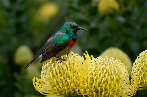 colorful birds 12 colorful birds from around the world matador network