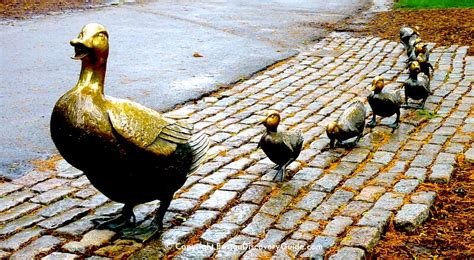 ducklings boston discovery guide