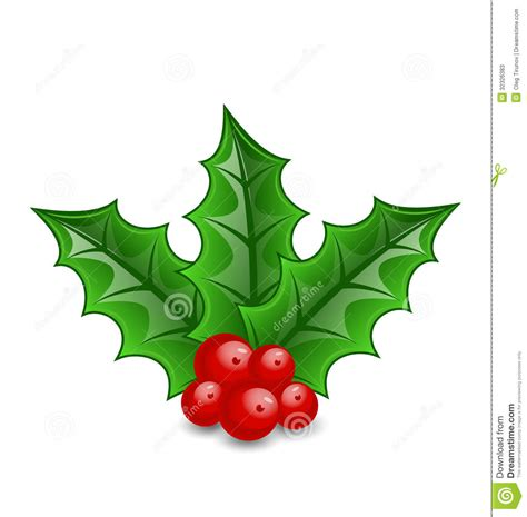 christmas decoration holly berry branches isolated stock