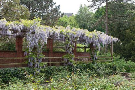 Garten Kaufen Auf Usedom by Pflanzen Kaufen Kletterpflanzen Pflanzen Sortiment