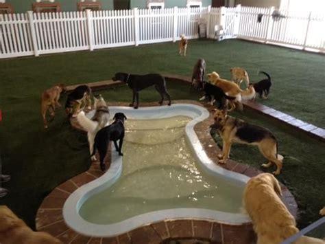 boarding dogs best 20 pet boarding ideas on boarding kennels hotels that take dogs