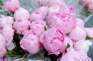 pink peonies pink peonies tickled pink pinterest