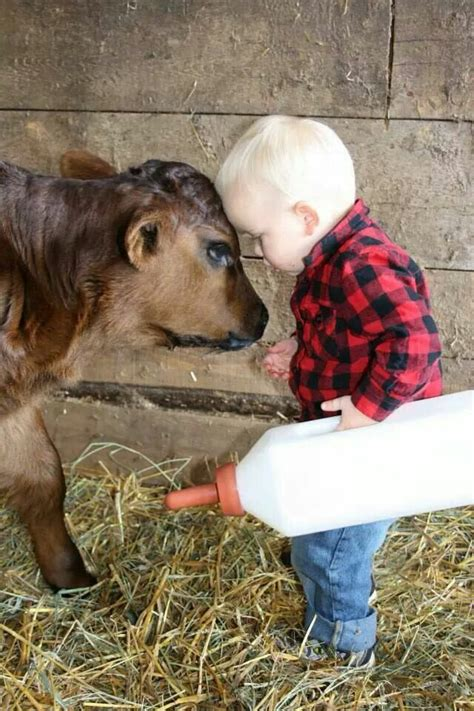 baby country best 25 baby cows ideas on cows cow and