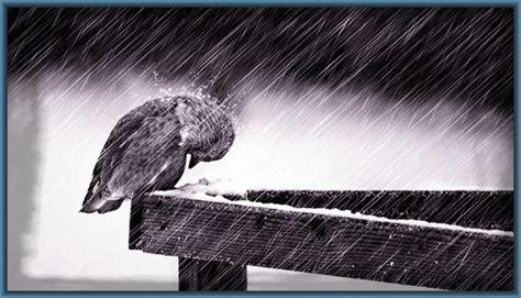 imagenes de tristeza para portada foto triste para perfil de facebook fotos de tristeza