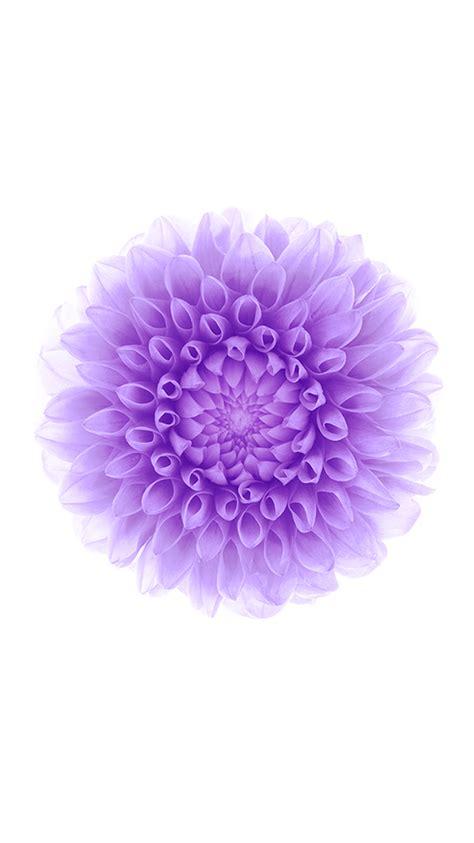 wallpaper iphone flower purple flower background