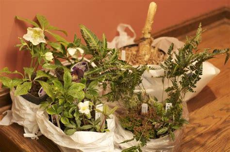 winter plant buying spree