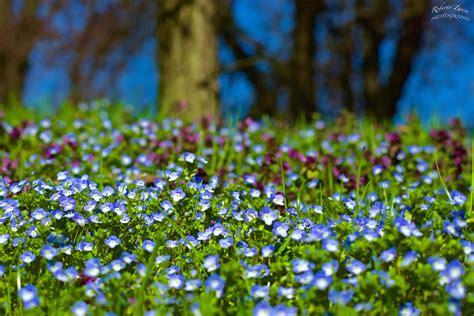 i giardini di marzo si vestono di nuovi colori i giardini di marzo si vestono di nuovi colori