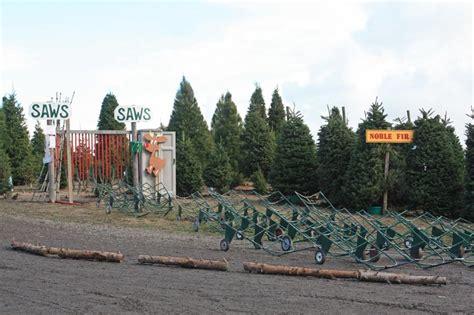 ponzi christmas trees marin marin sonoma tree farms lots marin mommies