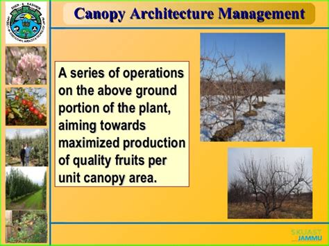 What Is Canopy Management by Canopy Management In Fruits
