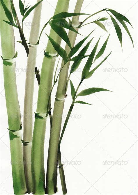 25 best bamboo tree trending ideas on bamboo tree bamboo and